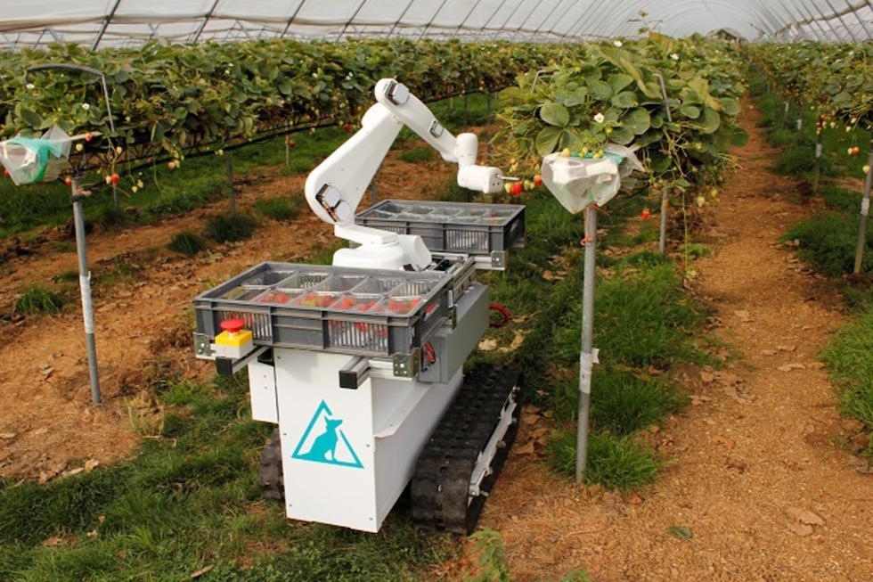 fruit_picking_robot.jpeg