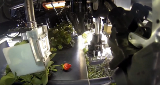 harvest-croo-strawberry-picking-robot-interior-view.png